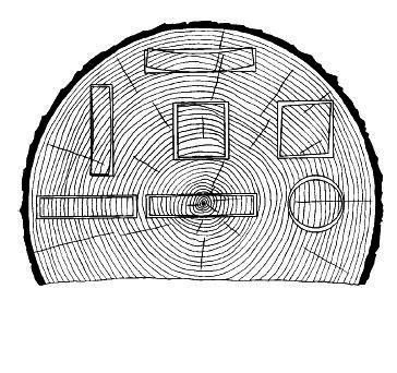 řezy dřeva